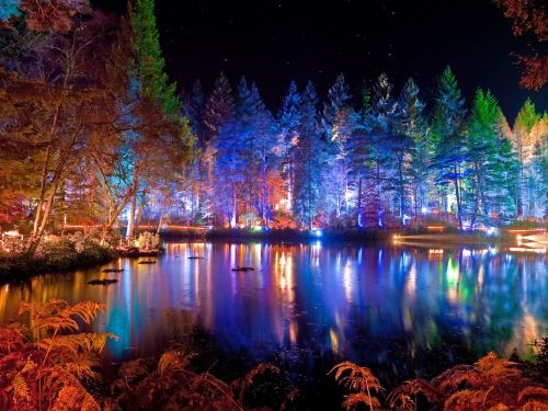 Pitlochry's Enchanted Forest
